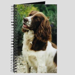 English Springer Spaniel Journal