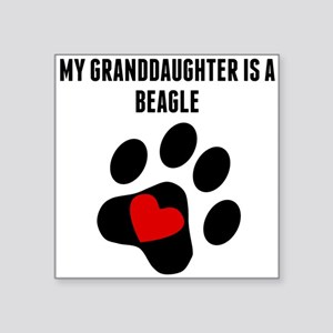 My Granddaughter Is A Beagle Sticker