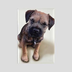 Border Terrier Boy Rectangle Magnet