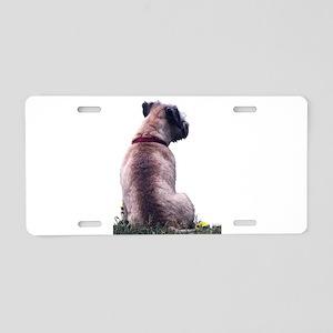 Border Terrier Watching Aluminum License Plate