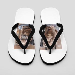 Pitbull Flip Flops