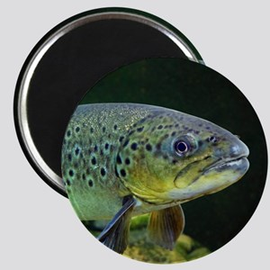 BROWN TROUT Magnets