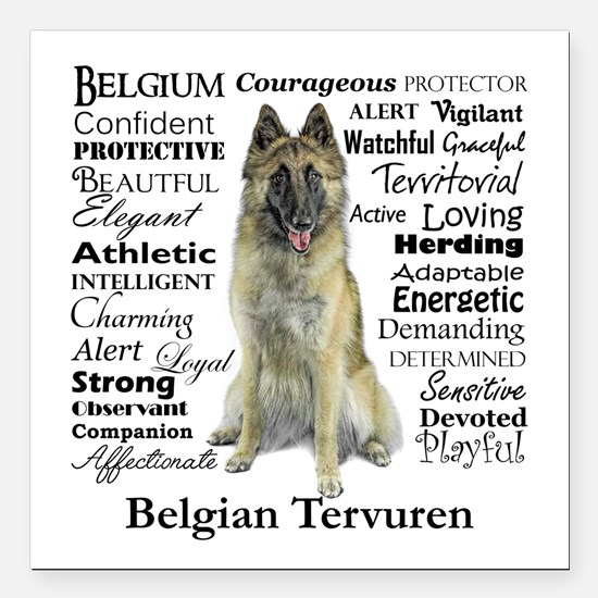 "Belgian Tervuren Traits Square Car Magnet 3"" x 3"""