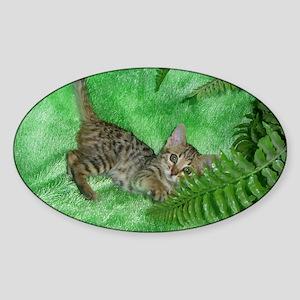 Bengal Kitten Oval Sticker