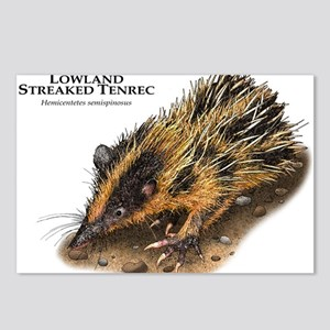 Lowland Streaked Tenrec Postcards (Package of 8)