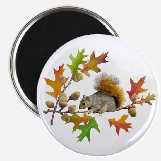 "Squirrel Oak Acorns 2.25"" Magnet (10 pack)"