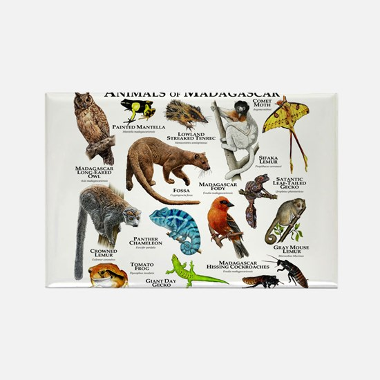 Animals of Madagascar Rectangle Magnet