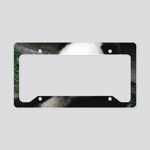 cute panda License Plate Holder