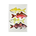 Four Indo-Pacific Goatfish Magnets