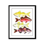 Four Indo-Pacific Goatfish Framed Panel Print