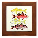 Four Indo-Pacific Goatfish Framed Tile