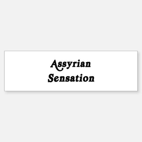 Assyrian Sensation Bumper Bumper Bumper Sticker
