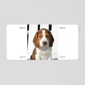 Baby Beagle Aluminum License Plate