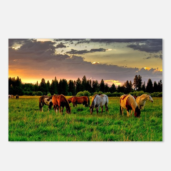 Horses Grazing Postcards (Package of 8)