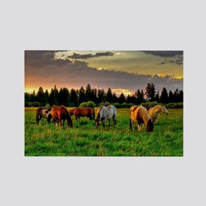 Horses Grazing Magnets