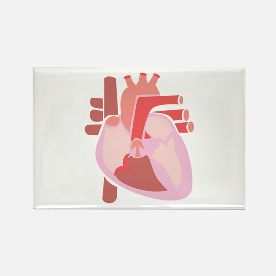 Human Heart Magnets