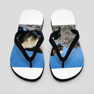 Wolverine Flip Flops
