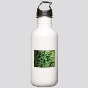 Marajuana Weed Pot Stainless Water Bottle 1.0L