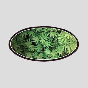 Marajuana Weed Pot Patch