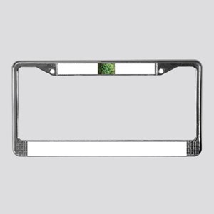 Marajuana Weed Pot License Plate Frame