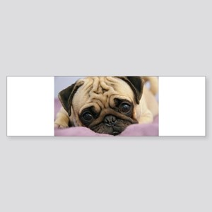 Pug Puppy Bumper Sticker