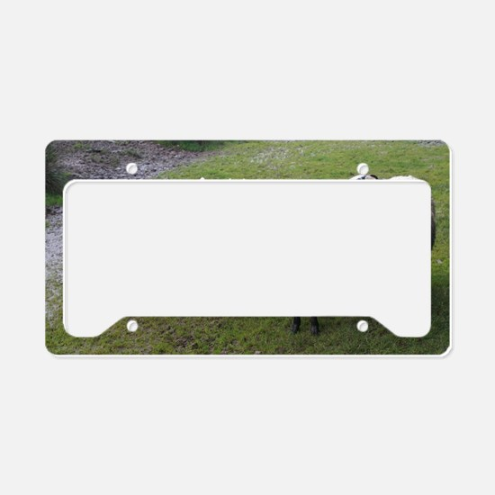 Cool Sheep License Plate Holder
