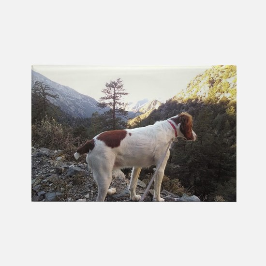 Brittany Spaniel Hiking Rectangle Magnet