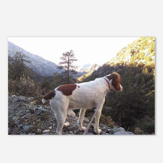 Brittany Spaniel Hiking Postcards (Package of 8)