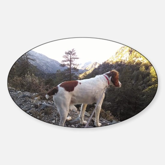 Brittany Spaniel Hiking Sticker (Oval)