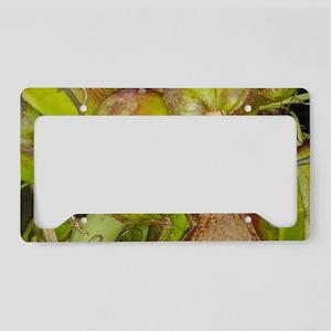 African Pods License Plate Holder