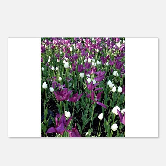 Purple & White Tulips Postcards (Package of 8)