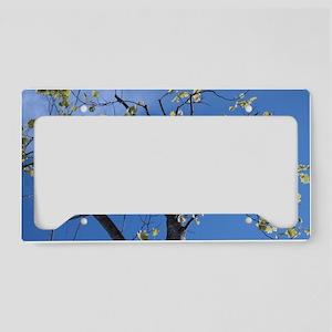 Tree in blue sky. License Plate Holder