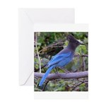Steller's Jay on Branch Greeting Card