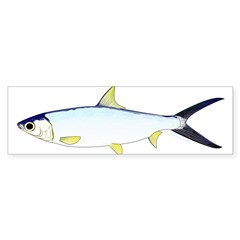 Milkfish Bumper Bumper Sticker
