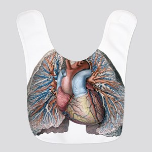 Human Anatomy Heart and Lungs Bib