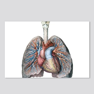 Human Anatomy Heart and L Postcards (Package of 8)