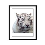DisappearingTigerWhLG2 Framed Panel Print