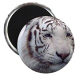 DisappearingTigerWhLG2 Magnets