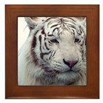 DisappearingTigerWhLG2 Framed Tile