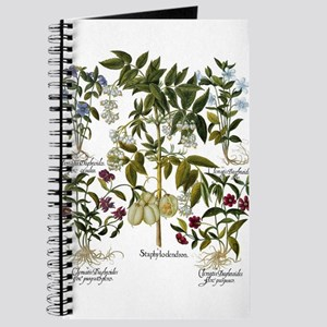 Vintage Flowers by Basilius Besler Journal