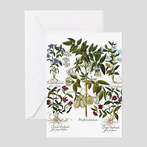 Vintage Flowers by Basilius Besler Greeting Cards