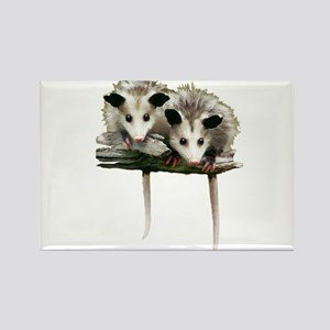 Baby Possums on a Branch Magnets