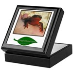 Rough Skinned Newt Salamander Keepsake Box