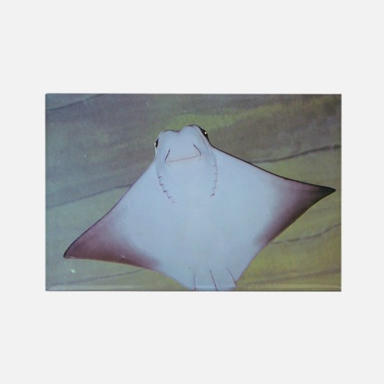 Cute Stingray Rectangle Magnet