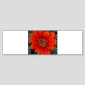 Single Orange Flower In The Garden Bumper Sticker