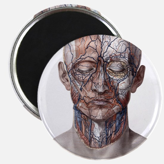 Human Anatomy Face Magnets