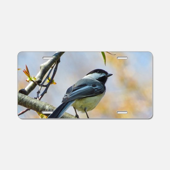 Spring Chickadee Aluminum License Plate