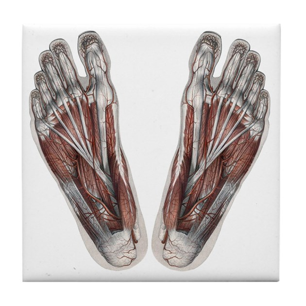 Vintage Human Anatomy Feet Tile Coaster by listing-store-14940502