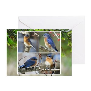 Eastern bluebirds gifts cafepress m4hsunfo