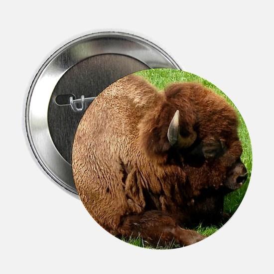 "Northwest Buffalo 2.25"" Button"